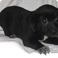 Adopt A Pet :: Moana - Pilot Point, TX