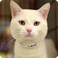 Adopt A Pet :: Lando - Chicago, IL