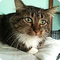 Adopt A Pet :: Tessa - Chesterfield, VA