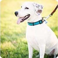 Adopt A Pet :: ROSEMARY - Houston, TX