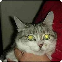 Adopt A Pet :: Kiki - Washington Terrace, UT