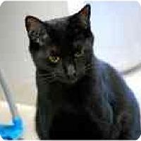 Adopt A Pet :: Preston Burke - Marietta, GA