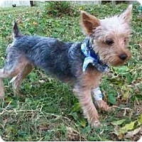Adopt A Pet :: Tigger - Gulfport, FL