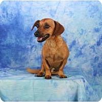 Adopt A Pet :: Timon - Ft. Myers, FL