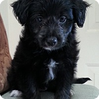 Adopt A Pet :: Mandi - Burbank, CA