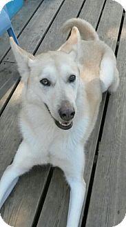 Husky Dog for adoption in Warkworth, Ontario - Scarlet