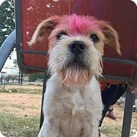 Adopt A Pet :: Rhett - Atlanta, GA