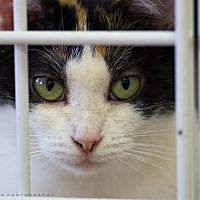 Adopt A Pet :: KATIE - Houston, TX