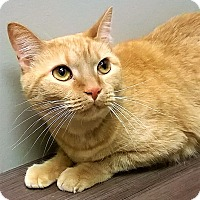 Adopt A Pet :: ADOPTED!!!   Missy - Downers Grove, IL