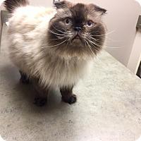 Adopt A Pet :: Edmund - Woodstock, ON