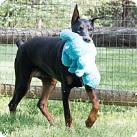 Adopt A Pet :: TAX - Greensboro, NC