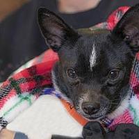Adopt A Pet :: Brendon - Colorado Springs, CO