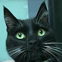 Adopt A Pet :: Lexi - Auburn, CA