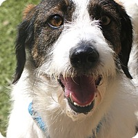 Adopt A Pet :: Rothchild - SUPER CUDDLY - Woonsocket, RI