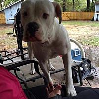 Adopt A Pet :: Kaya - DeRidder, LA
