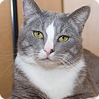 Adopt A Pet :: Apollo - Irvine, CA