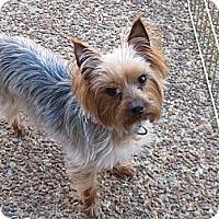 Adopt A Pet :: Allie - Kittery, ME