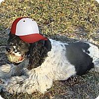 Adopt A Pet :: Toby - Sugarland, TX