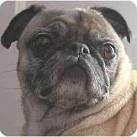 Adopt A Pet :: Stella - Mays Landing, NJ