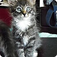 Adopt A Pet :: Arya - Orinda, CA