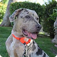 Adopt A Pet :: Jayne - Mission Viejo, CA