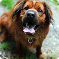 Adopt A Pet :: Buddy Love - Tinton Falls, NJ