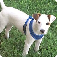 Adopt A Pet :: Penny - Houston, TX