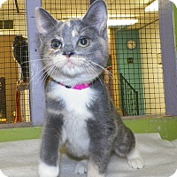 Adopt A Pet :: Macy - Dover, OH