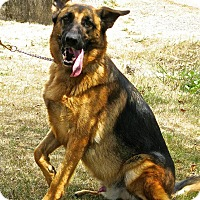 Adopt A Pet :: Migo*PENDING* - Mill Creek, WA