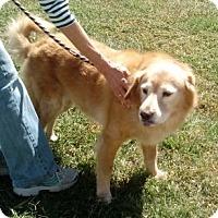 Adopt A Pet :: Katie - New Canaan, CT