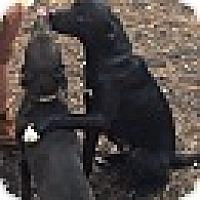 Adopt A Pet :: KANE - MILWAUKEE, WI
