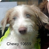 Adopt A Pet :: Chewy - Greencastle, NC