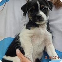 Adopt A Pet :: Star (3 lb) - SUSSEX, NJ