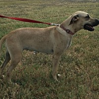 Adopt A Pet :: Taffy - Cat Spring, TX