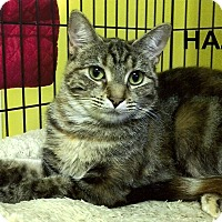 Adopt A Pet :: Hazel - Medway, MA