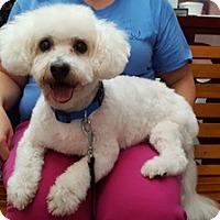 Adopt A Pet :: TJ - Harrison, NY