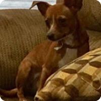 Adopt A Pet :: Polly - Centerville, GA