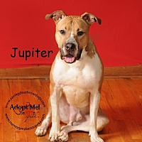 Adopt A Pet :: Jupiter - Topeka, KS