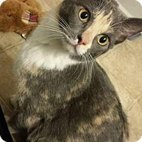 Adopt A Pet :: Gabby - Princeton, MN