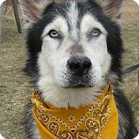 Adopt A Pet :: Timber - Menomonie, WI