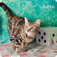 Adopt A Pet :: Lauren - Glendale, AZ