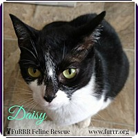 Adopt A Pet :: Daisy - Gonic, NH
