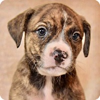 Adopt A Pet :: Clover - CUMMING, GA