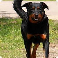 Adopt A Pet :: WILEY - Pegram, TN
