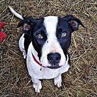 Adopt A Pet :: Winchester - Fredericksburg, VA