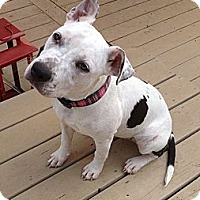 Adopt A Pet :: DaisyJane - Plainfield, CT