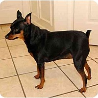 Adopt A Pet :: Annabelle#2 - Nashville, TN