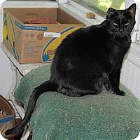 Adopt A Pet :: Sarah (Serenity) - Sanford, ME