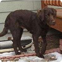 Adopt A Pet :: Nicole - Denver, CO