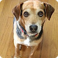 Adopt A Pet :: Jackson Bean - Hagerstown, MD